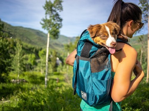 Front-Facing Dog Backpack Carriers
