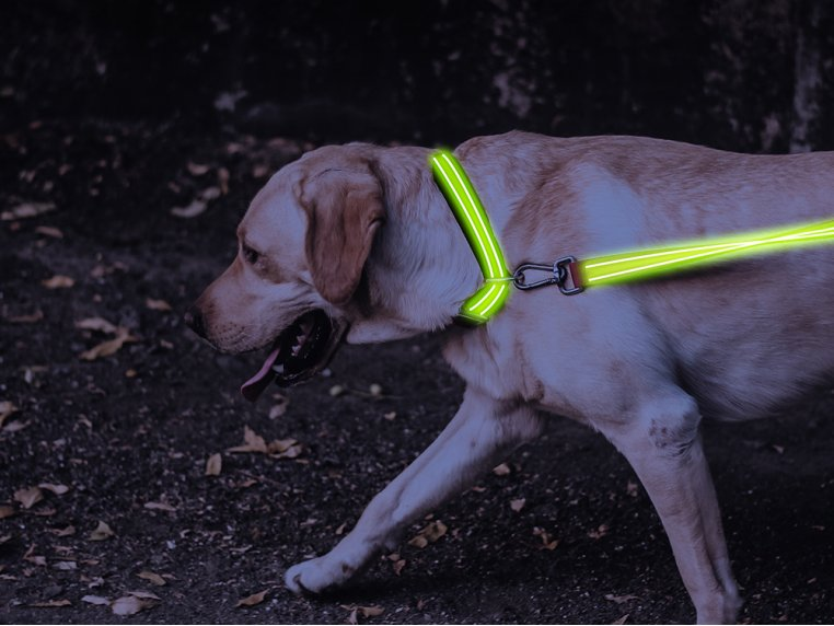 LED Light Up Collar by 4id - 2