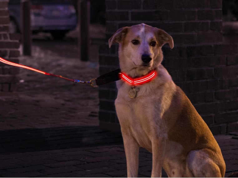 LED Light Up Collar by 4id - 1
