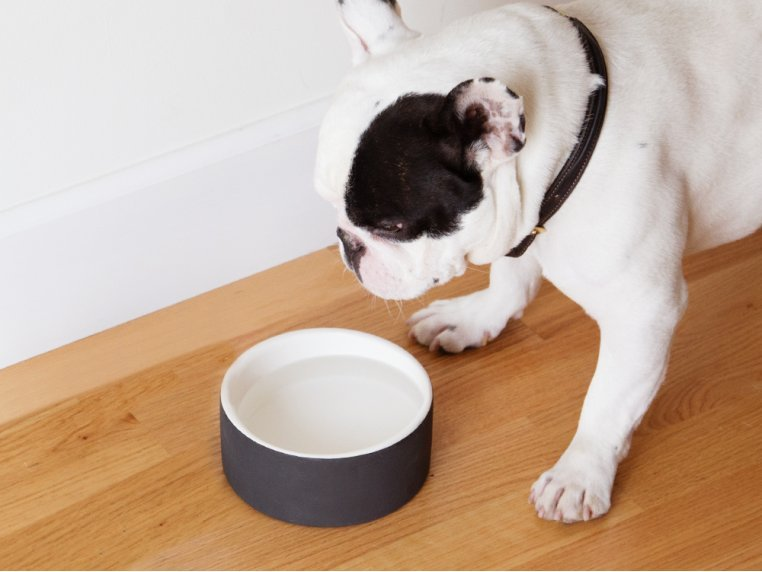 Water Bowl by Magisso Happy Pet Project - 1