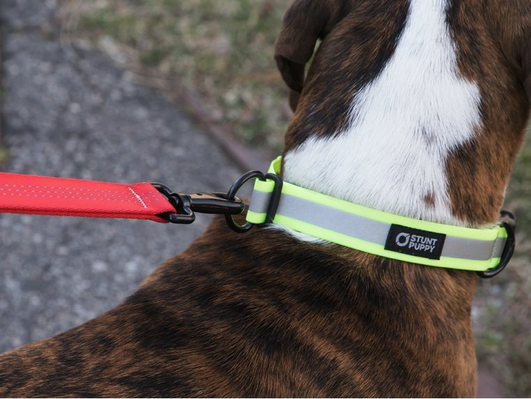 Reflective Dog Collar by Stunt Puppy - 2