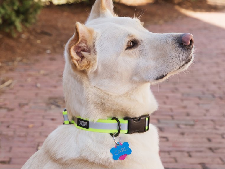 Reflective Dog Collar by Stunt Puppy - 1