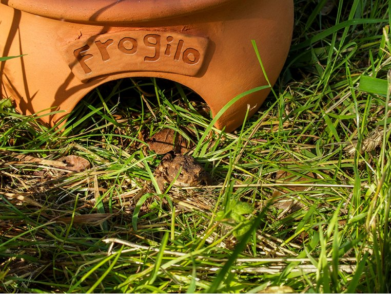 Ceramic Frog & Toad House by Wildlife World - 4