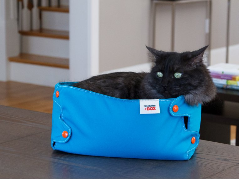 Compression Cat Box by Whisker+Box - 2