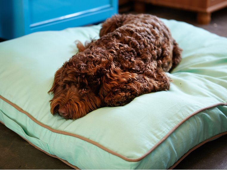 Nightswimming Dog Bed Duvet by Molly Mutt - 2