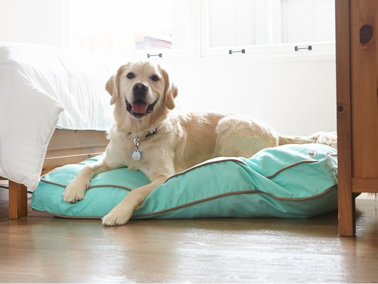 Nightswimming Dog Bed Duvet by Molly Mutt - 1