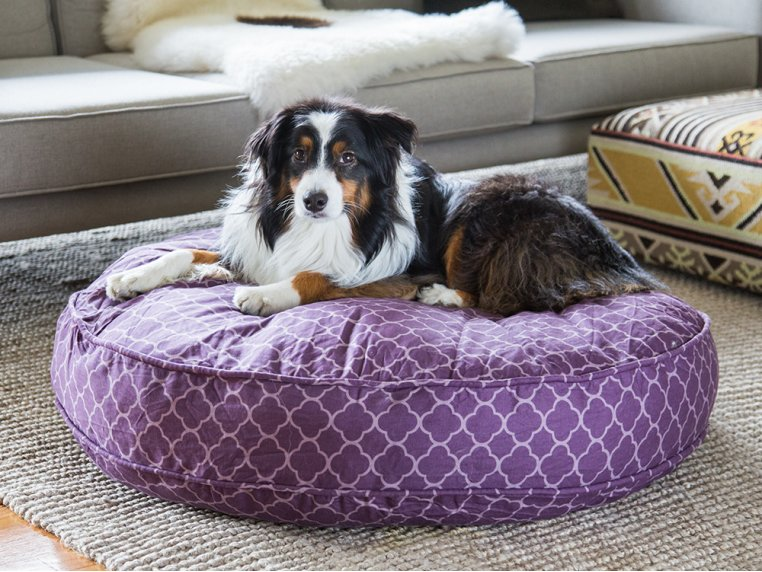 Royals Dog Bed Duvet & Stuff Sack by Molly Mutt - 2