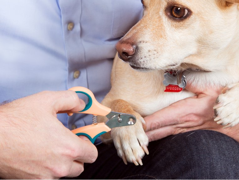 Safety Pet Nail Clipper by Zen Clipper - 3