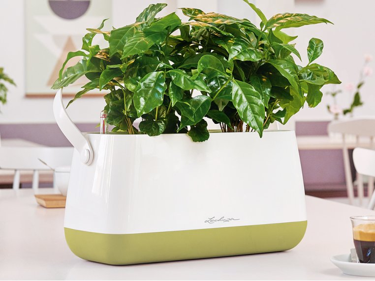 Yula Self-Watering Double Planter by LECHUZA - 1