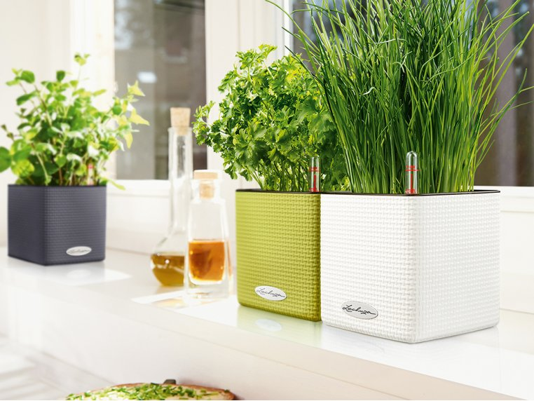 Cube Self-Watering Planter by LECHUZA - 2
