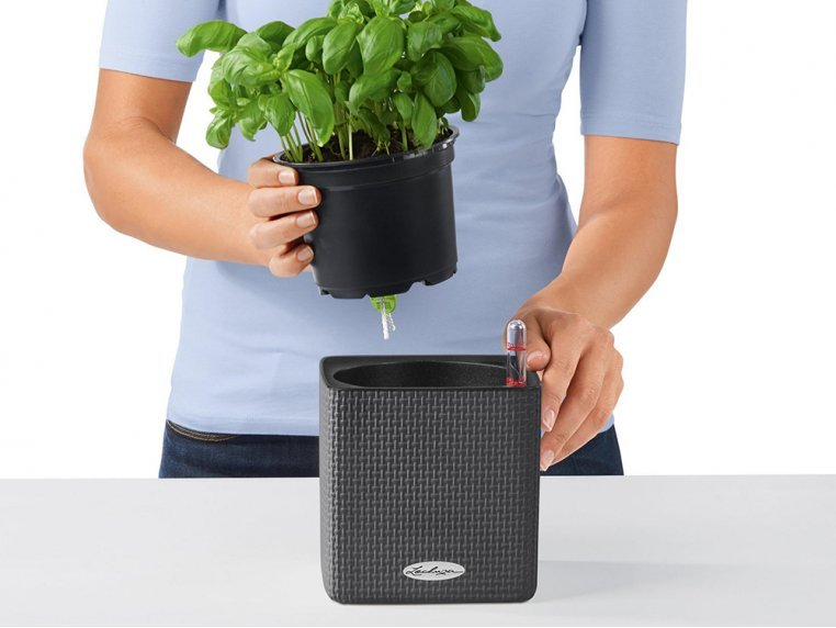 Cube Self-Watering Planter by LECHUZA - 3