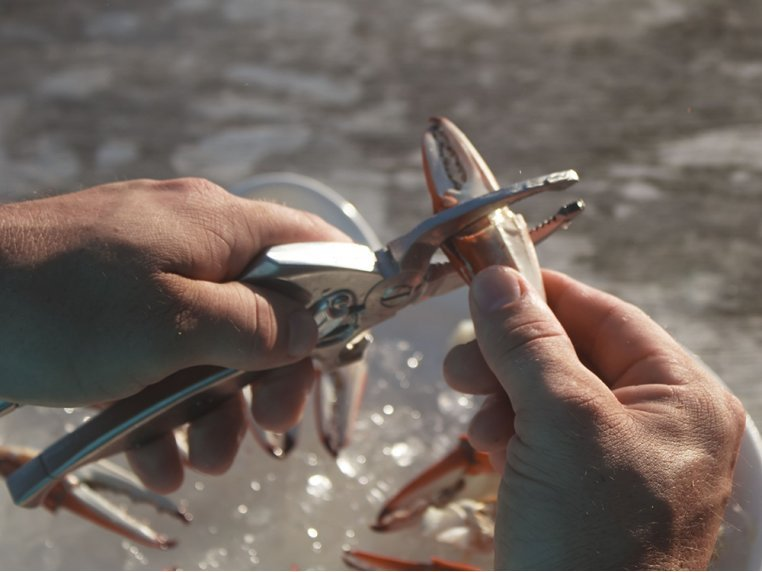Crab Claw Cutter by Toadfish Outfitters - 2