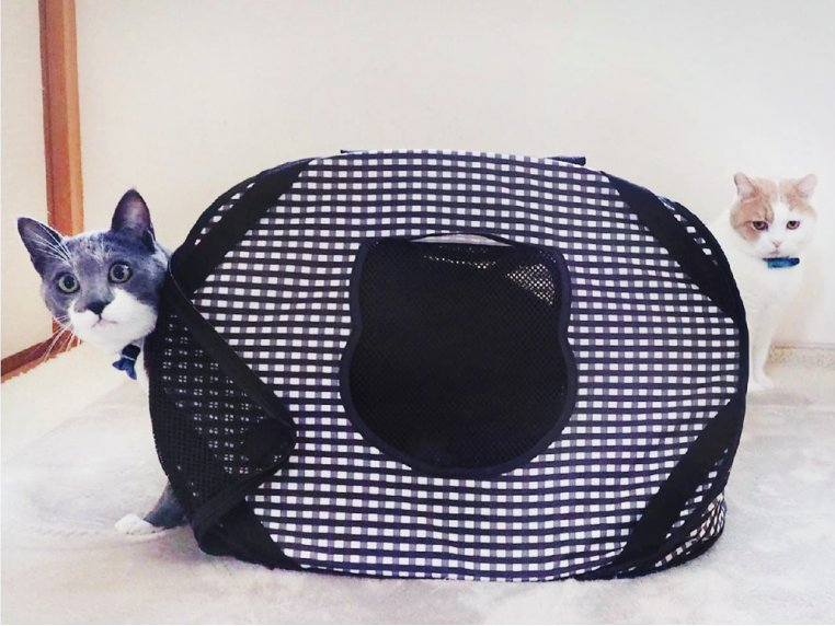 Ultra-Light Collapsible Cat Carrier by Necoichi - 2