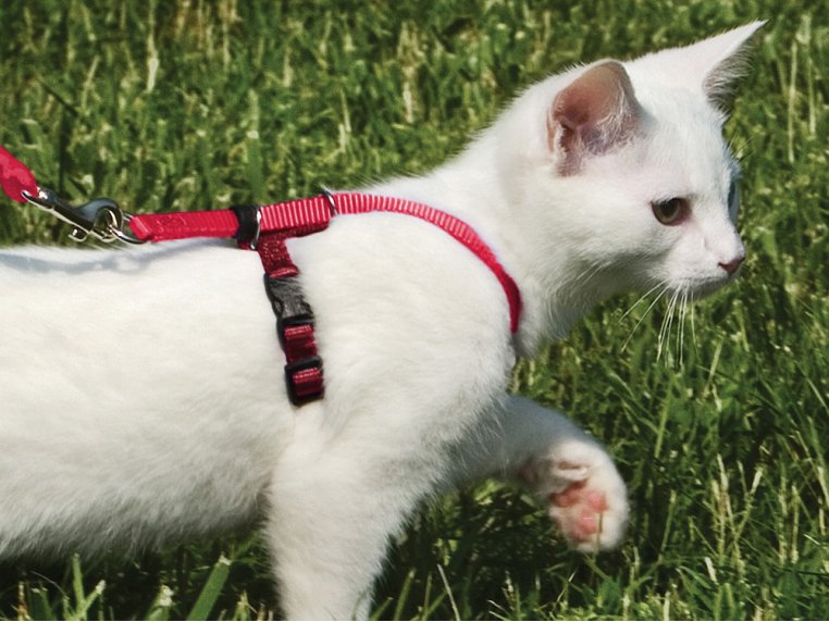 Come With Me Kitty™ Harness & Leash by PetSafe® - 2