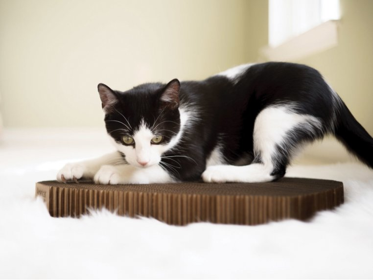 Durable Cardboard Cat Scratching Pad by Americat Company - 2