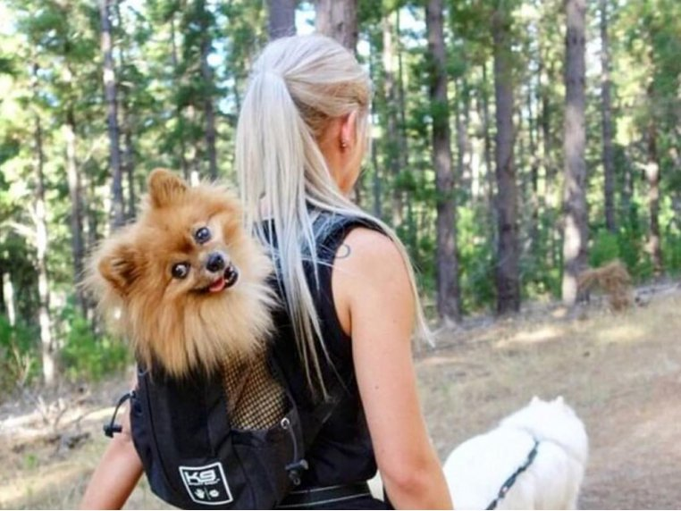 Trainer Dog Backpack Carrier by K9 Sport Sack® - 3