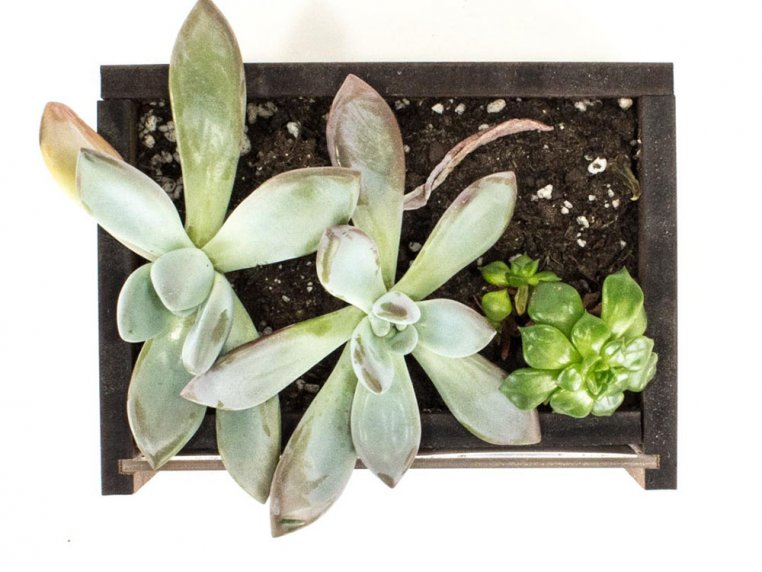 Wooden Picture Frame Desktop Planter by Woodchuck USA - 2