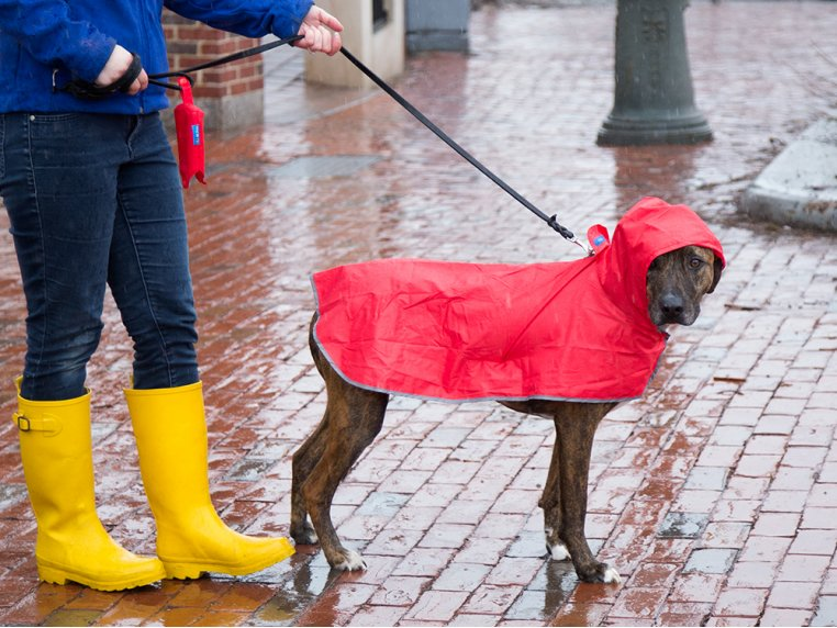 Packable Rain Poncho by RC Pets - 4