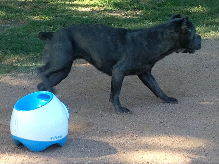 Automatic Dog Ball Launcher - Large by iFetch Too - 2
