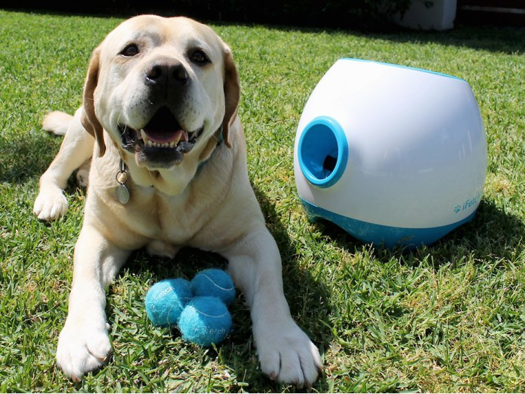 Automatic Dog Ball Launcher - Large by iFetch Too - 1