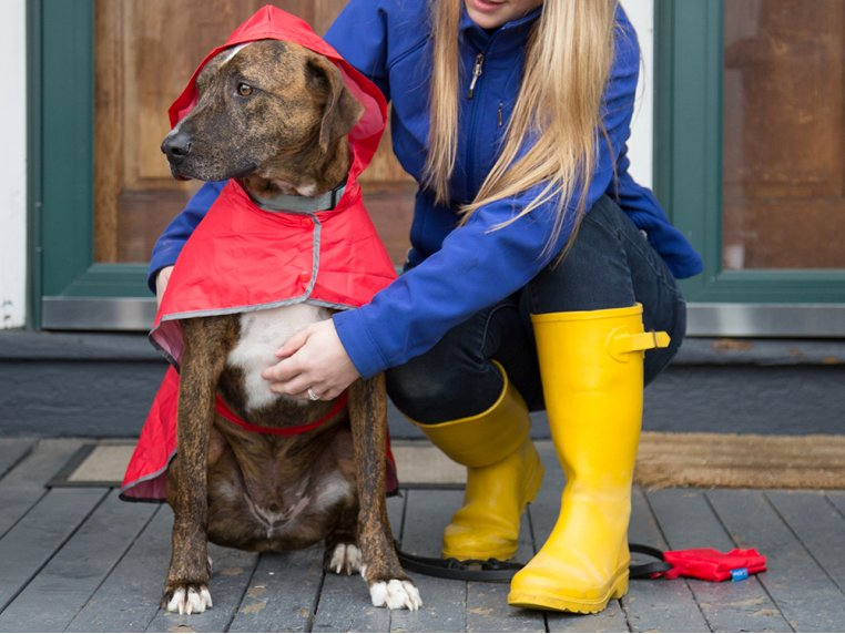 Packable Rain Poncho by RC Pets - 1