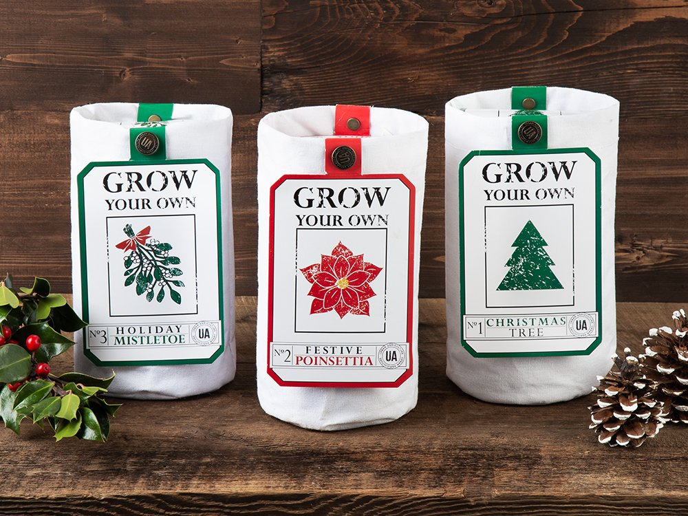 Grow Your Own Holiday Plant Kit