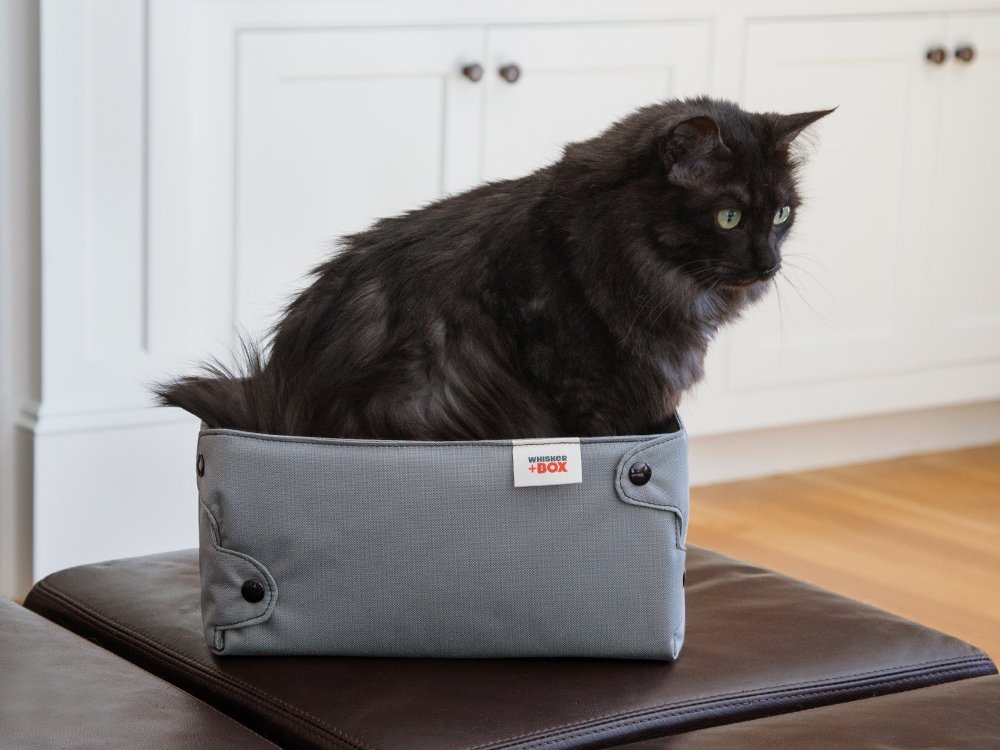 Compression Cat Box